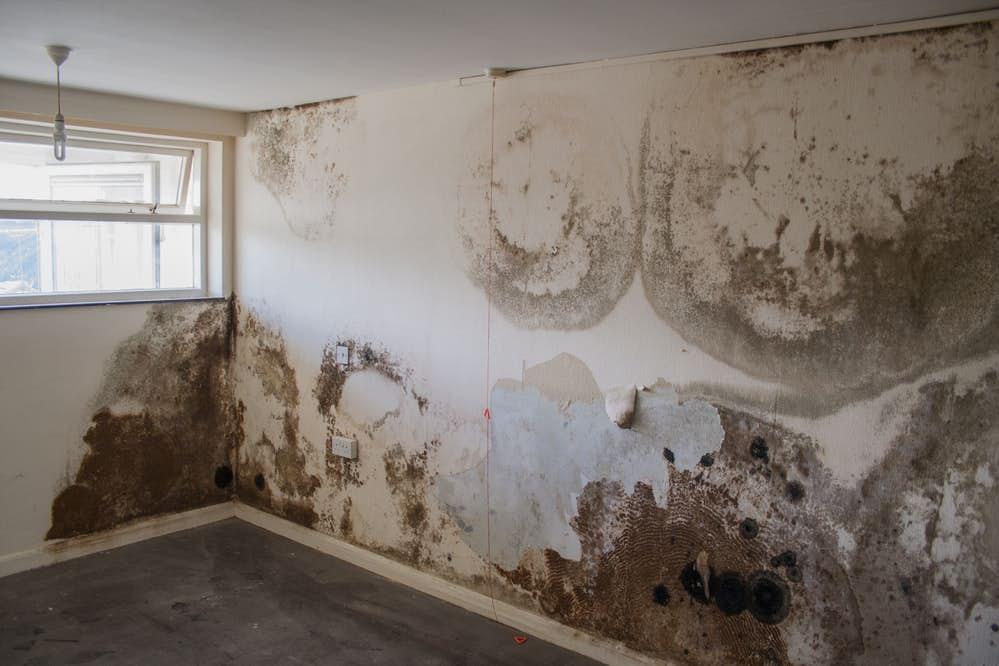 Tường nhà dễ bị ẩm mốc